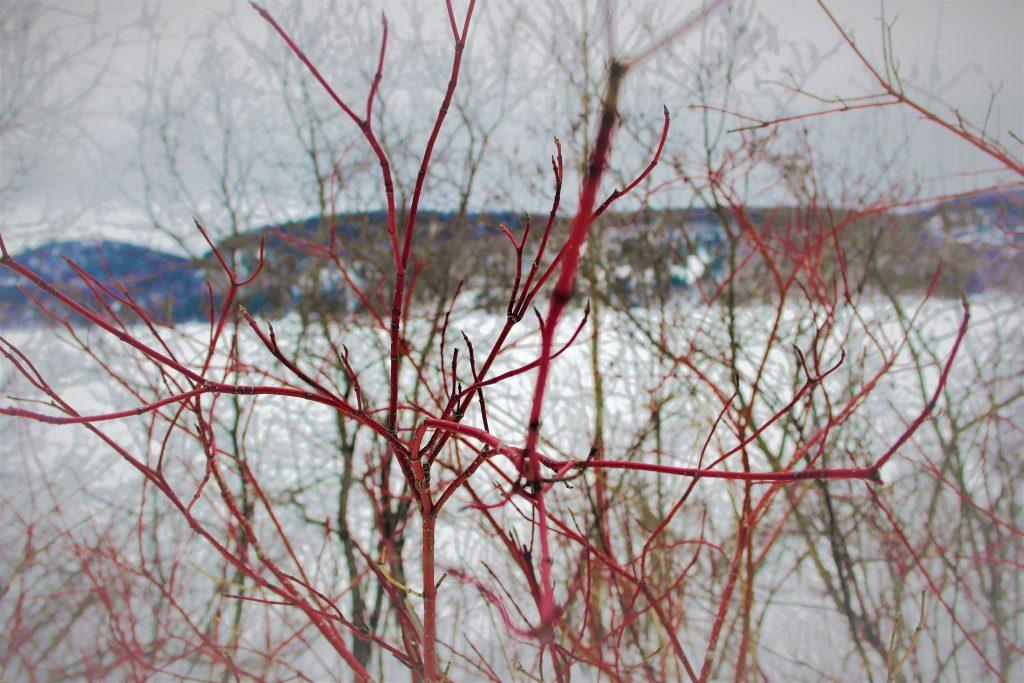 Cod Winter Nature