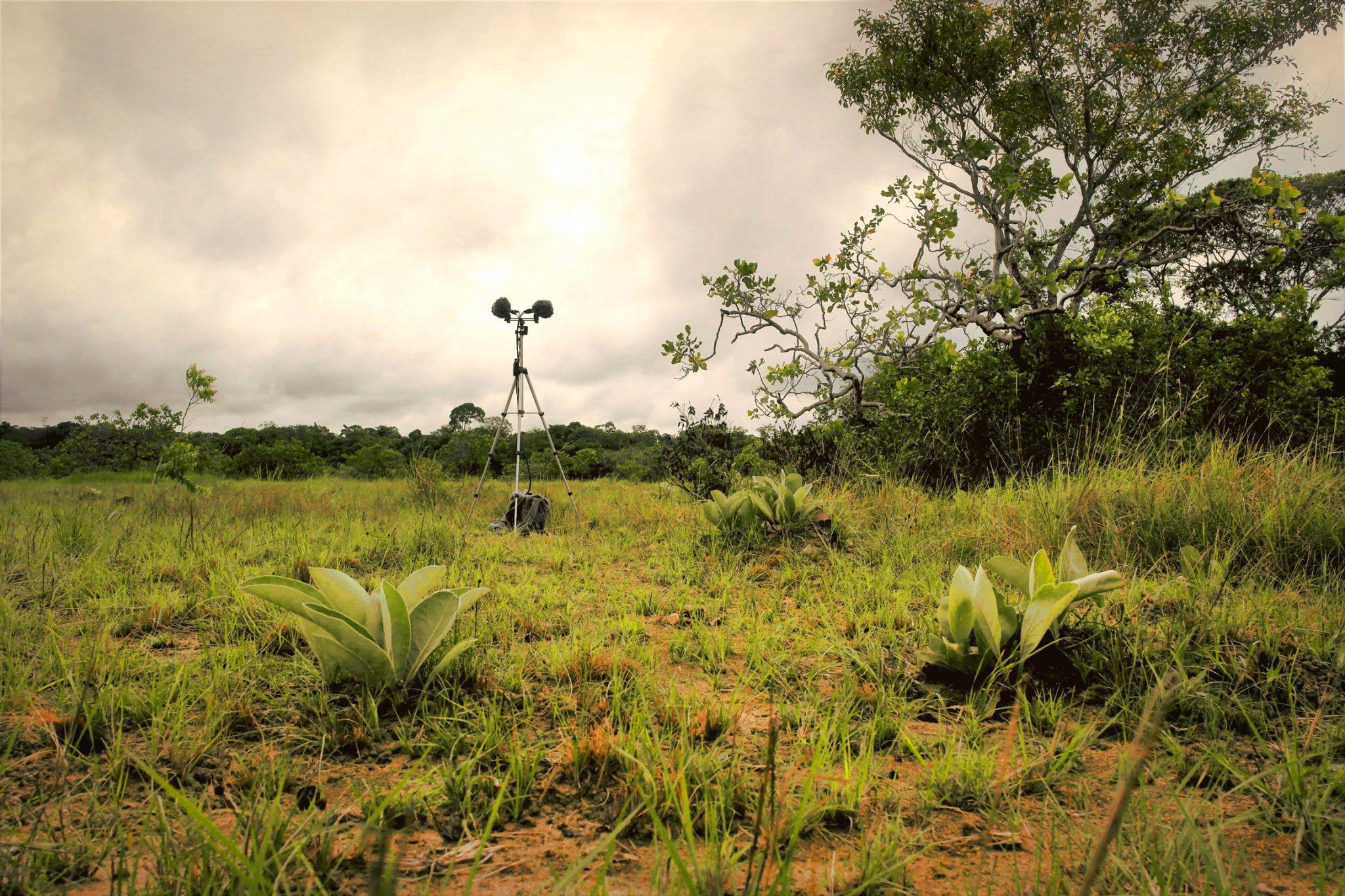 Recording Wild Soundscape