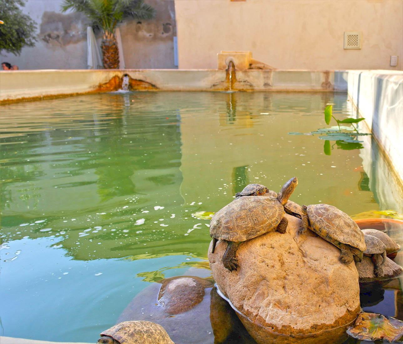 Jardin secret de Marrakesh