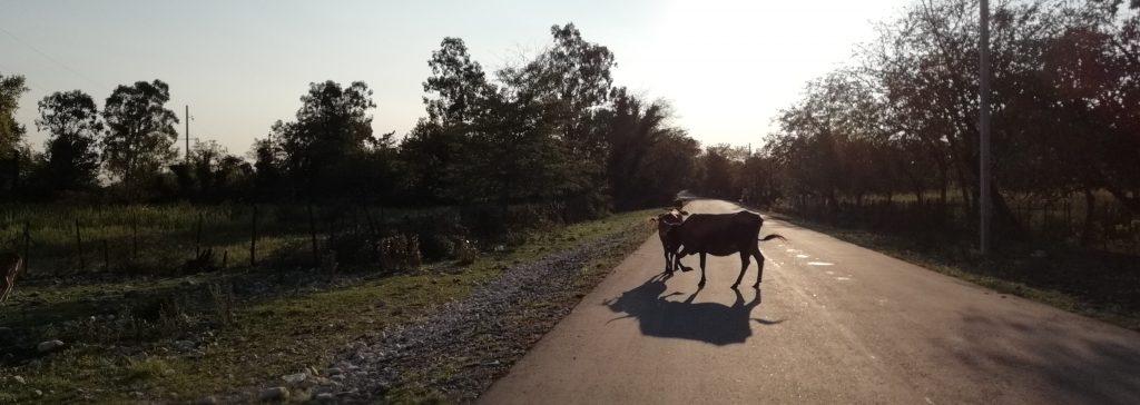 Cow Georgia Street